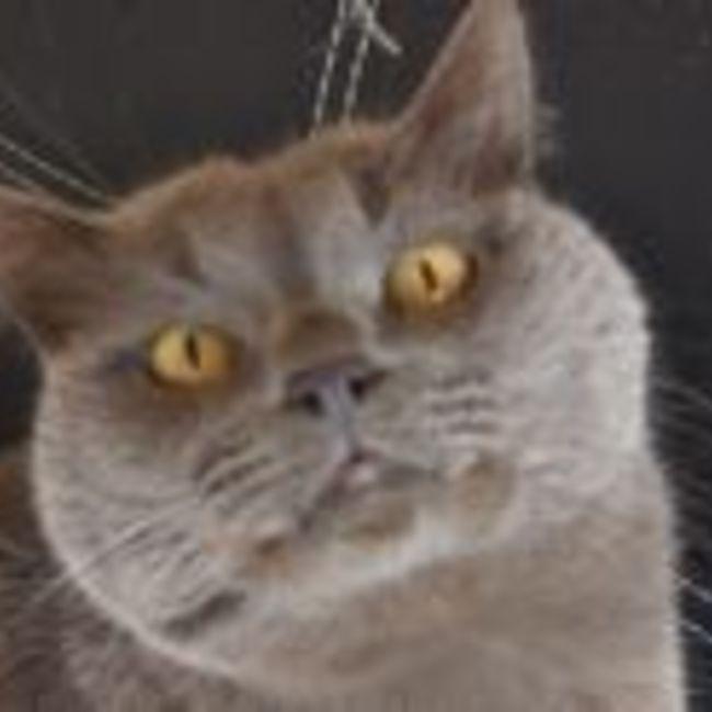 ヒトの暮らし猫との暮らしのカバー写真