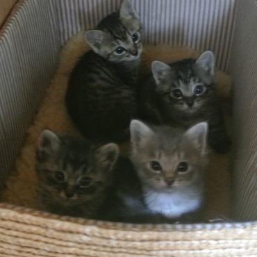 今年初めて保護した兄弟姉妹4匹ちゃん