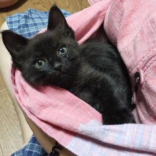 元気いっぱい!黒猫の男の子!生後1ヶ月半!