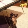 元気いっぱい仔猫のベリー