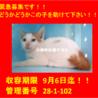 二匹でお迎え頂きました☆(*^▽^*)感謝♪