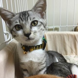 人馴れの良い銀色の猫