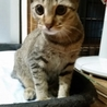 飼い主さん急死でアパートに取り残されました。 サムネイル3