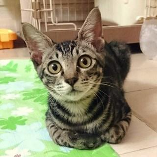 まん丸おめめの可愛い猫ちゃん♪