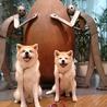 秋田犬の園長