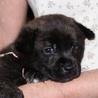 甲斐MIXの子犬  8月3日生まれ メス1