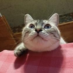 猫の何でも相談会