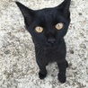 捨てられた黒猫 珍しい虎柄の人懐っこい猫ちゃん。