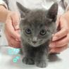 オスメスの兄弟猫 サムネイル2