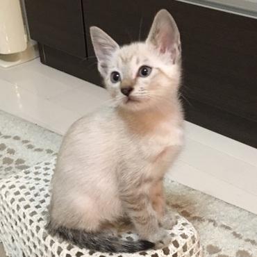 愛らしく美猫に成長してるプニちゃん♪♪