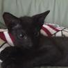 生後2ヵ月、3本足の元気な黒猫ちゃん サムネイル2