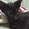 生後2ヵ月、3本足の元気な黒猫ちゃん サムネイル4