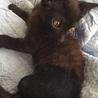 生後2ヵ月、3本足の元気な黒猫ちゃん サムネイル6