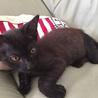 生後2ヵ月、3本足の元気な黒猫ちゃん サムネイル7