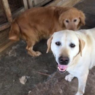 優しい引退犬達