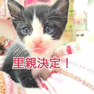 子猫が3匹産まれました(*ˊ˘ˋ*)♪