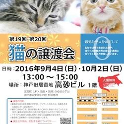 """猫の譲渡会 in 神戸三宮  """" 猫のミーナ """""""