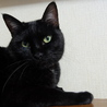 控えめで大人しい黒猫、千重ちゃん サムネイル4