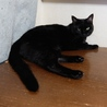 控えめで大人しい黒猫、千重ちゃん サムネイル5