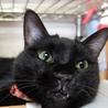 控えめで大人しい黒猫、千重ちゃん サムネイル6