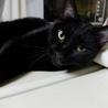 控えめで大人しい黒猫、千重ちゃん サムネイル2