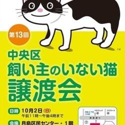 中央区 飼い主のいない猫 譲渡会