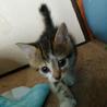 野良子猫4ニャンズ最後の1匹です!