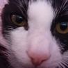 おとなしいけど遊ぶの大好き白黒仔猫のお米くん! サムネイル6