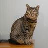 静かな生活が望みの被災猫マアム サムネイル2
