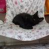 淡路島の黒子猫ちっちゃいです