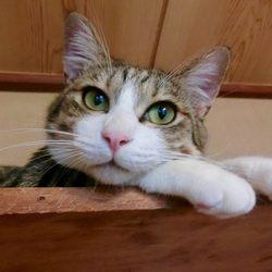 猫の里親譲渡会