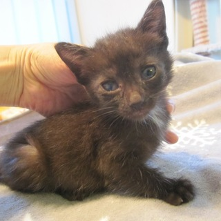 動画有りツキノワグマみたいな黒猫たばさちゃん