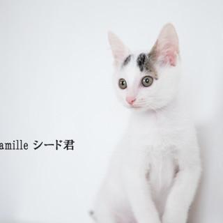 白黒子猫のシード君