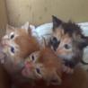 『おねがい、たすけて!』飼育放棄の『赤ちゃん猫!』
