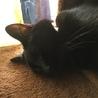 保護猫の風邪と隔離について教えて下さい