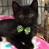 黒子猫ピッチくん サムネイル2