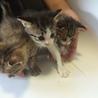可愛いさかりの3匹の子猫です