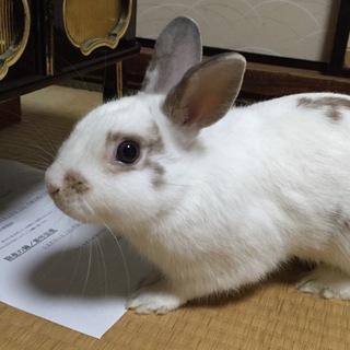 ウサギちゃんの里親さん探してます!