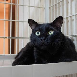 ネグレストから解放された黒猫、カール君