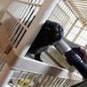 ネグレストから解放された黒猫、カール君 サムネイル5