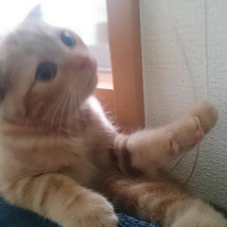 募集一時停止  再)7月生まれ子猫