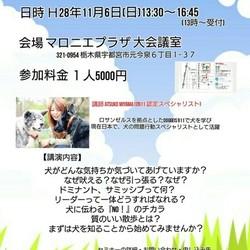 Doggies911 DBS MIYAMAセミナーin栃木