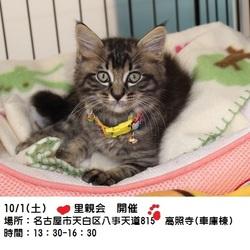 閑静な八事のお寺~高照寺~で猫のお見合い会