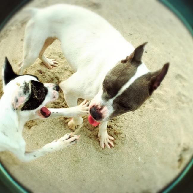 動物保護団体PONTのカバー写真