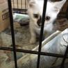 2か月の可愛い子猫が4匹(^O^)/