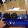 里親募集 保護猫 生後1カ月 男の子と女の子 黒猫