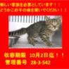 9/23に18匹の子猫が収容!期限10/2迄!⑰
