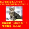 9/23に18匹の子猫が収容!期限10/2迄!⑱