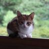 元気な可愛いやんちゃ猫を家族に迎えて下さい❗