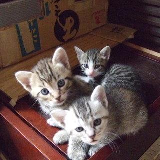 1ヶ月のかわいい子猫ちゃんたち